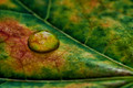 Man's life is like a drop of dew on a leaf - Socrates