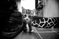 the bravest kitten