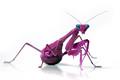 Malaysian Berry Mantis