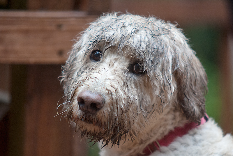 Muddy Fur - A Hunter's lament
