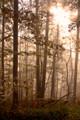 Sunbeams On A Foggy Morning