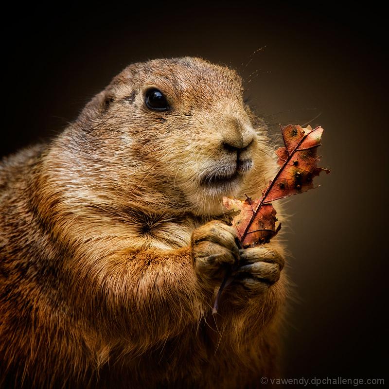 The Leaf Eater