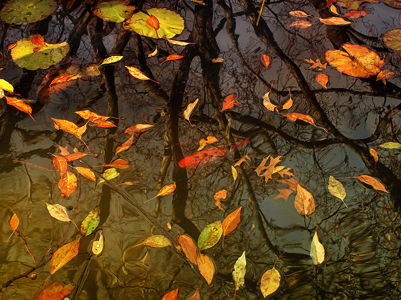 every leaf speaks bliss to me (Emily Bronte)