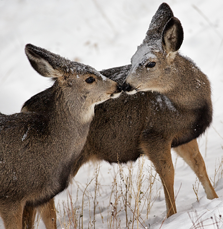 Twins comfort each other in the Snowstorm.
