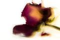 Dead Flora