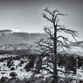 Winter Solstice Sentinel