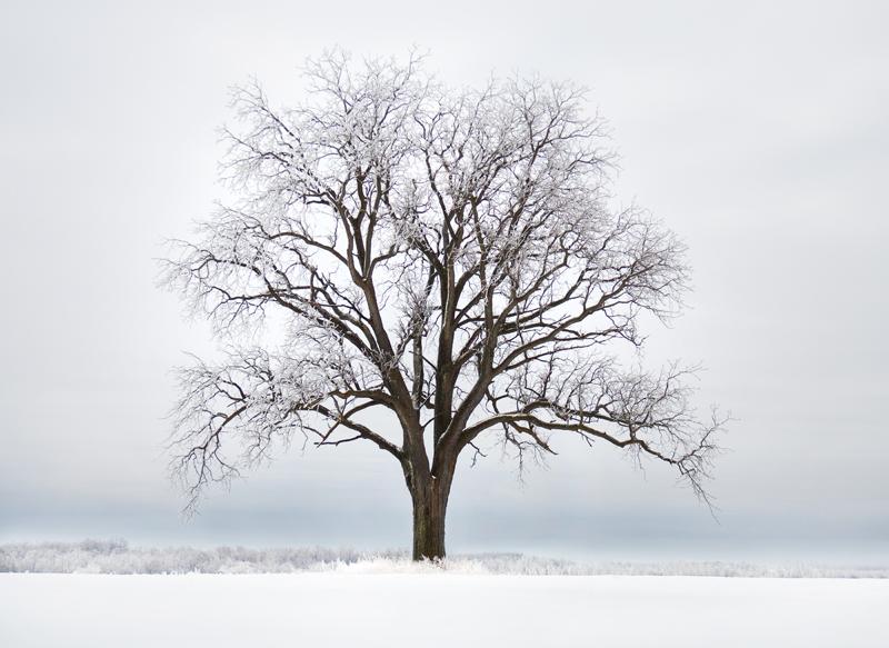 Syma Tree