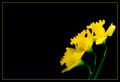 Praising Spring