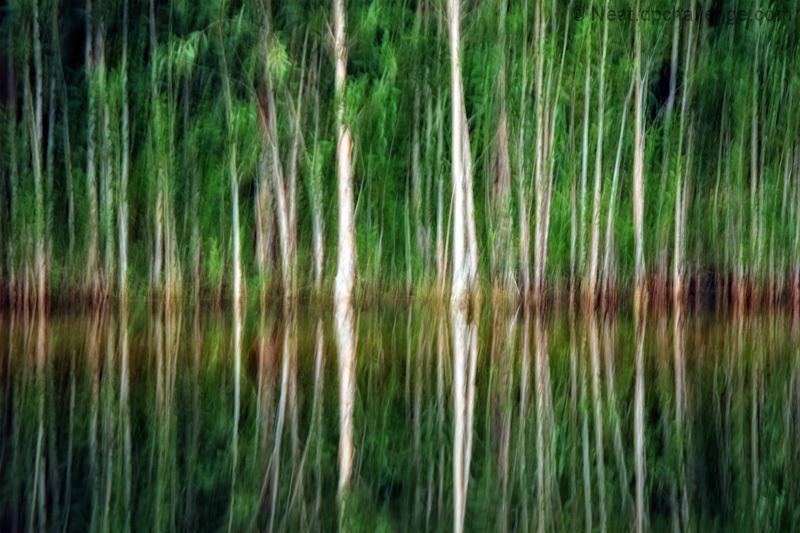 Impressions of a  lake