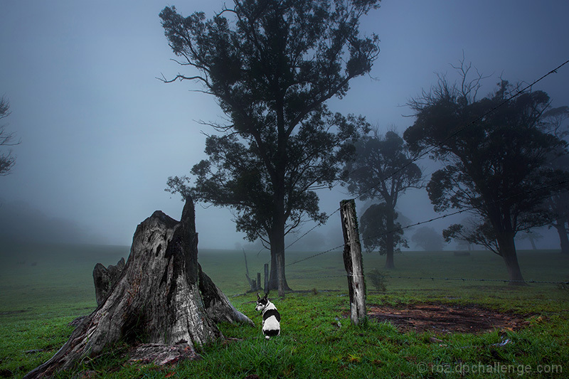 a fence in the fog with trees and a dog