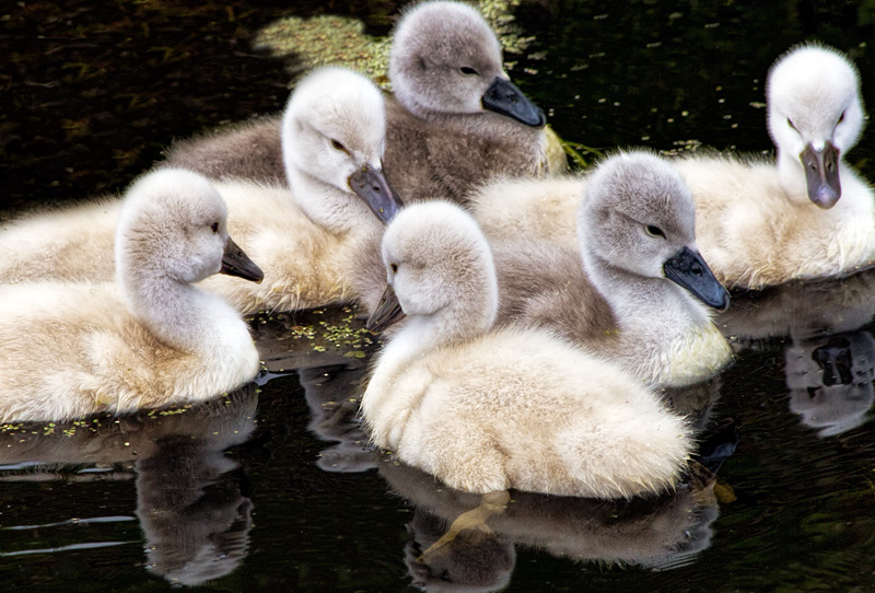 Beautiful Ugly Ducklings