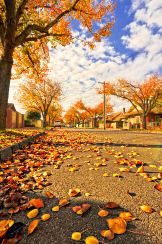 Autum in southern country