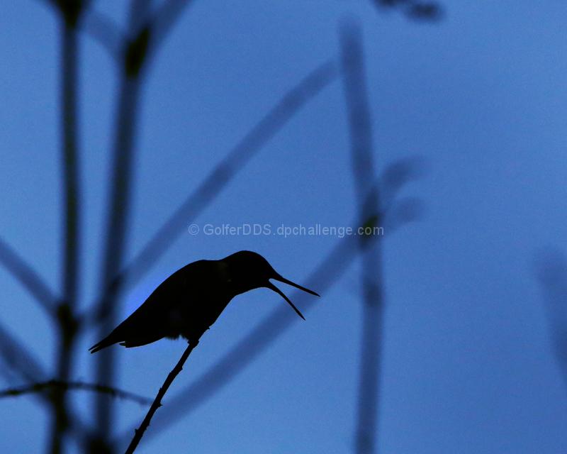 A Hummingbird At The Edge Of Nightfall