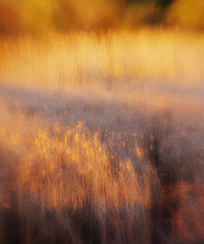sun in the wetlands