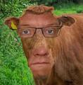 Noble, no bull