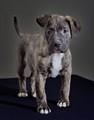 Please Adopt Me