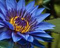 azure wonder