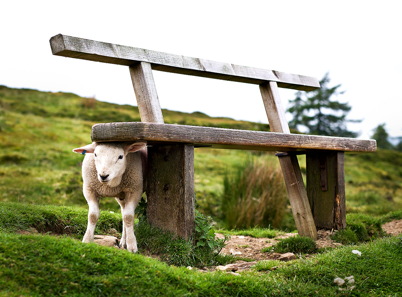 Bench, Dales Style