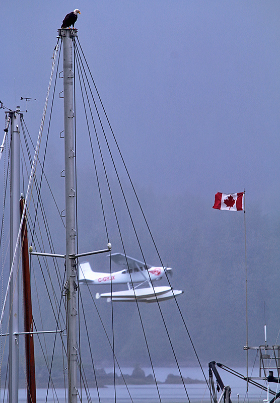 Birds, boats, planes and flags are just some of the users of wind...