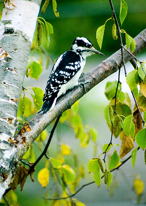 Birds in the Trees