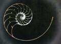 Classic Spiral