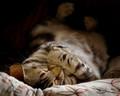 Cozy Cat Nap
