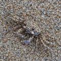 Crabouflage
