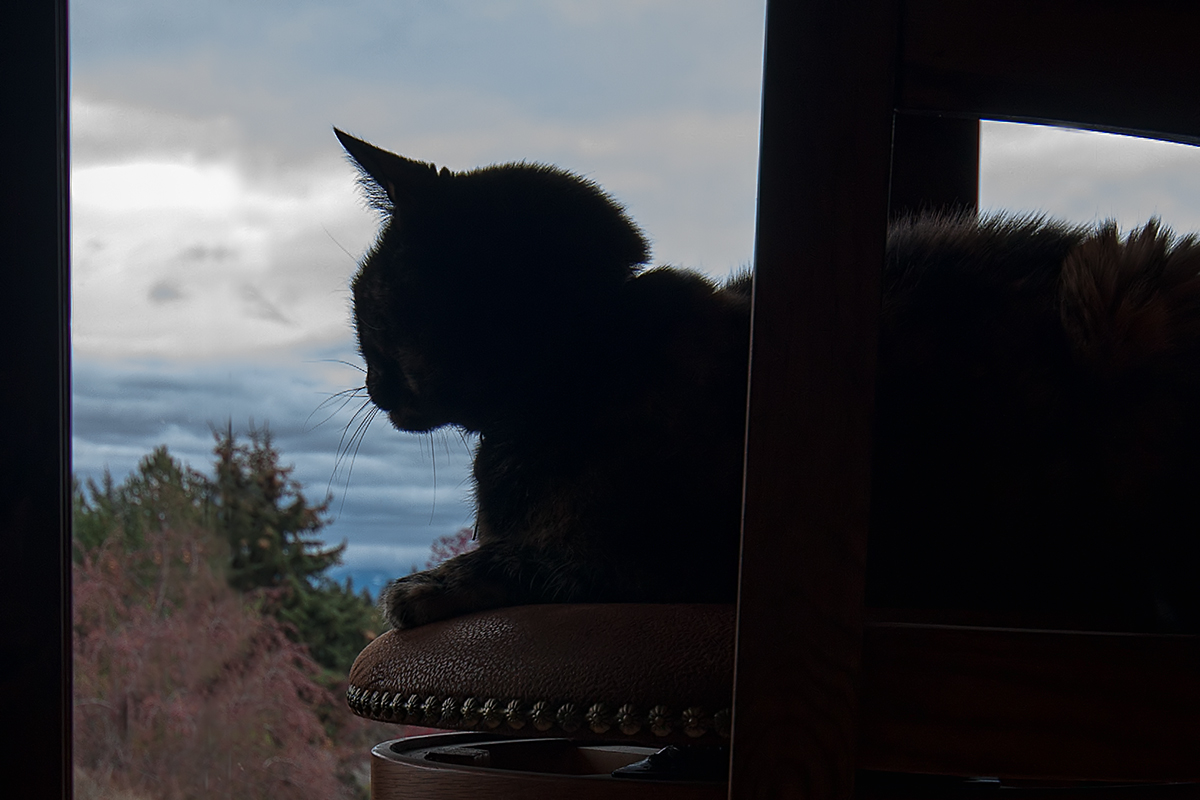 the lookout