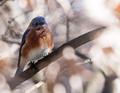 Bluebird Dreams