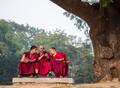 Tibetan geeks