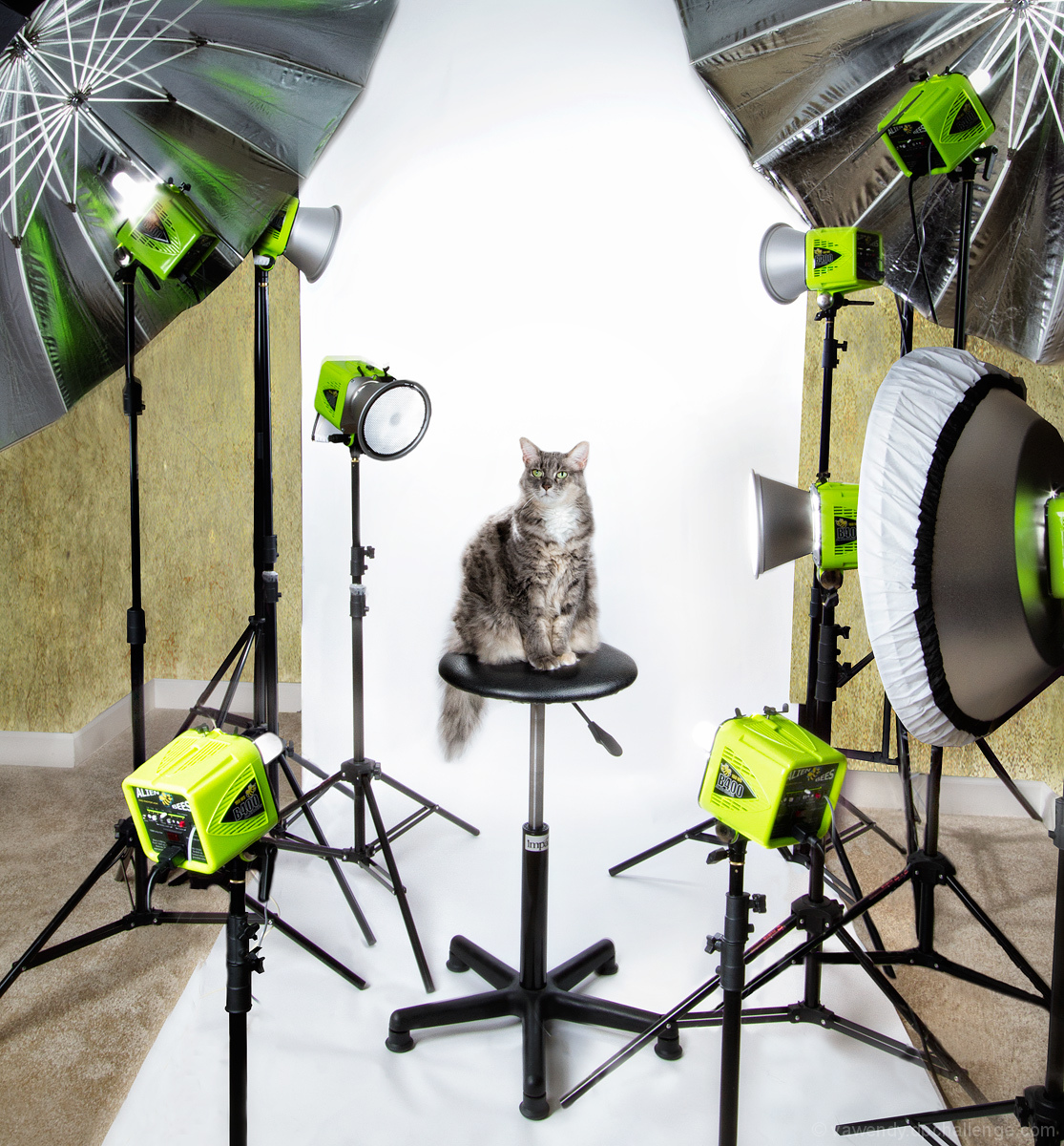 Santa, Could I please have a couple of studio lights?