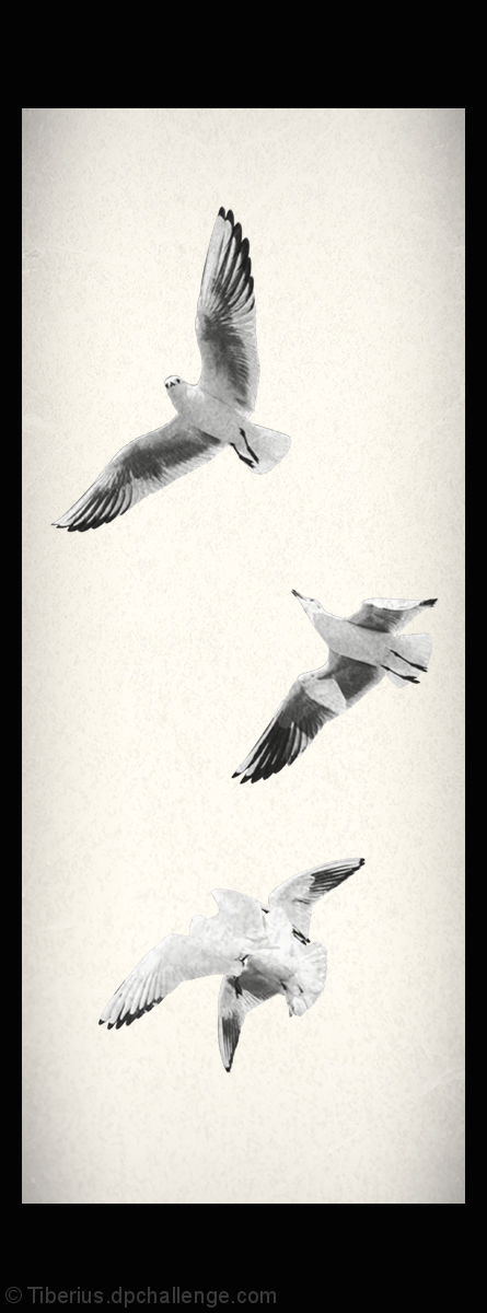 Seagulls in the Air