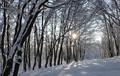 winter sun star