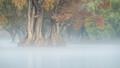 Nature impressionism