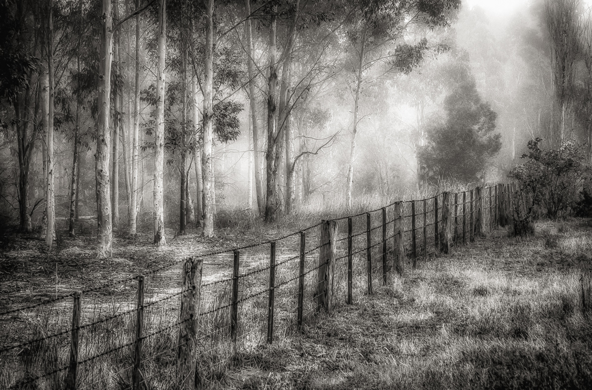 Old Farm Fence