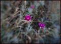 Flower of December