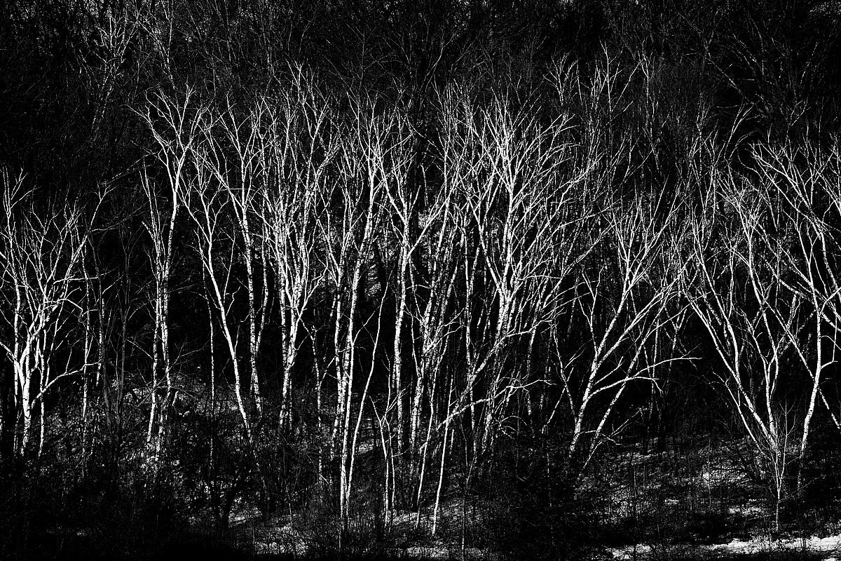 Forest Specter