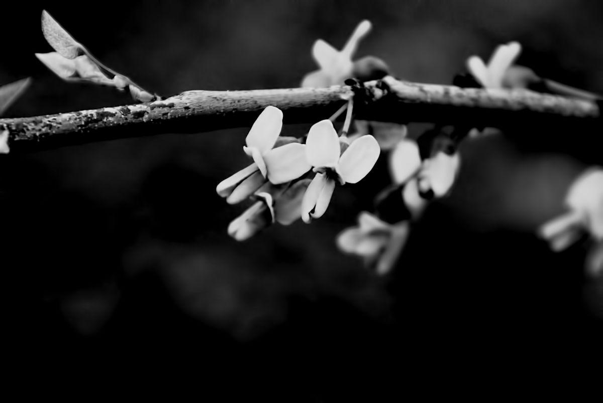 Blooming to spite the dark.