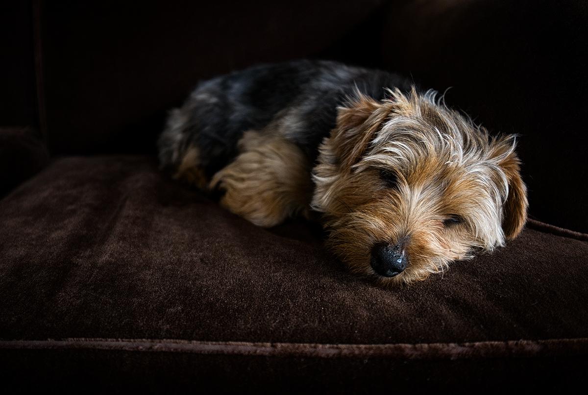 Mischief at rest