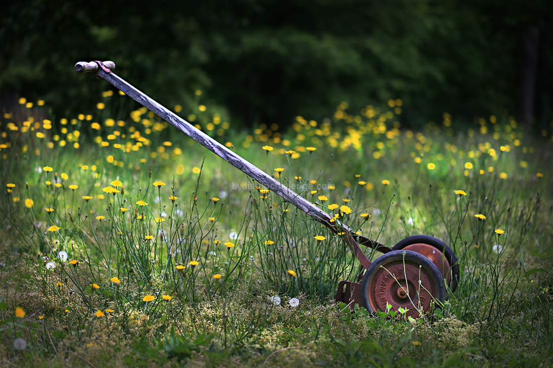 The Push Mower and The Lawn
