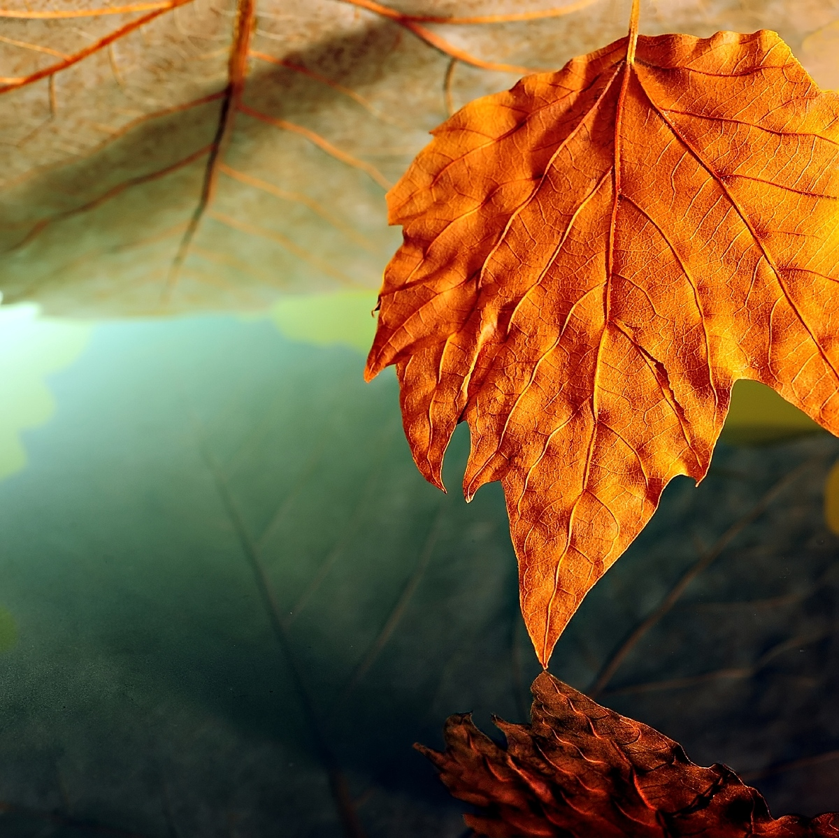 Never think that dead leaves cannot speak...