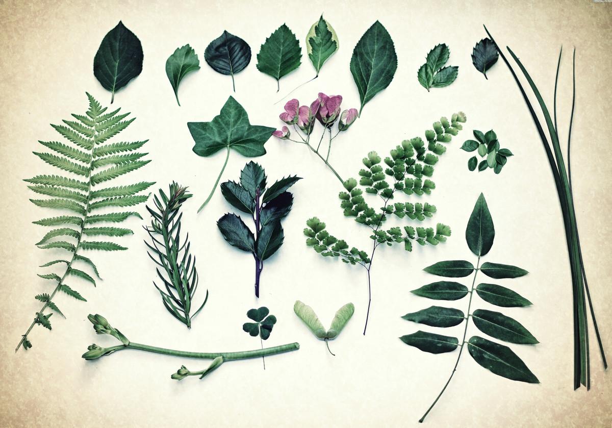 Leaf Botanical