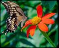 ~Butterfly Garden~