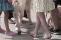 sidewalk cotillion