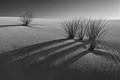 White Sands Shadows