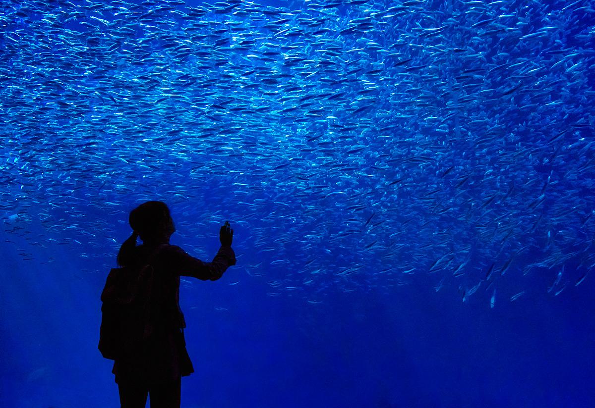 The fish whisperer by bear music dpchallenge for The fish whisperer