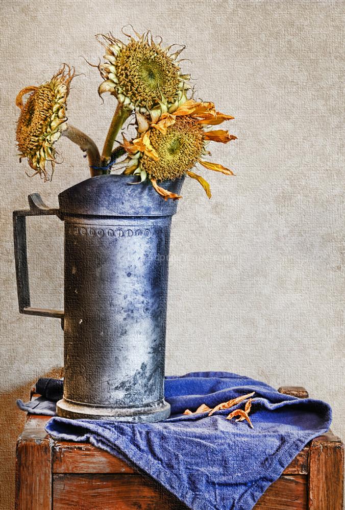 Sunflower StillLife
