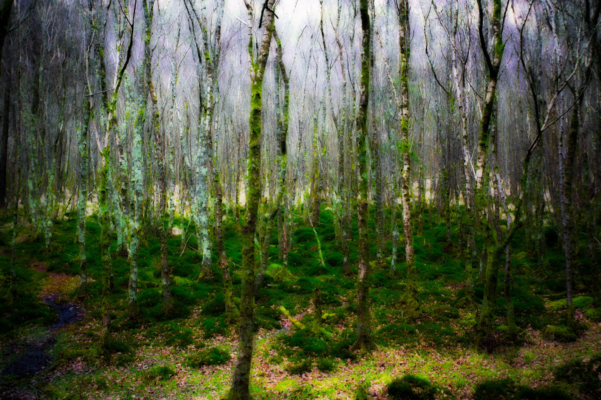 The Orton Trees