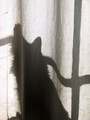 The Shadow Meows