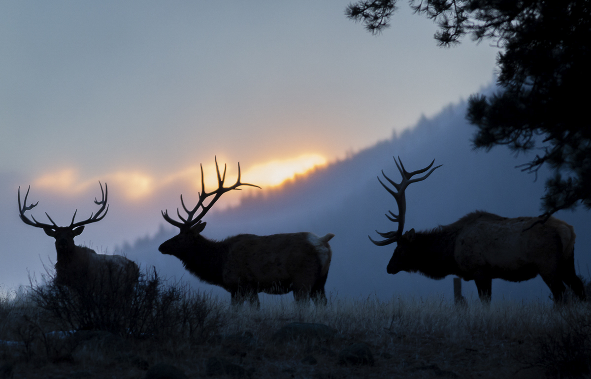 Antlers at Sunrise